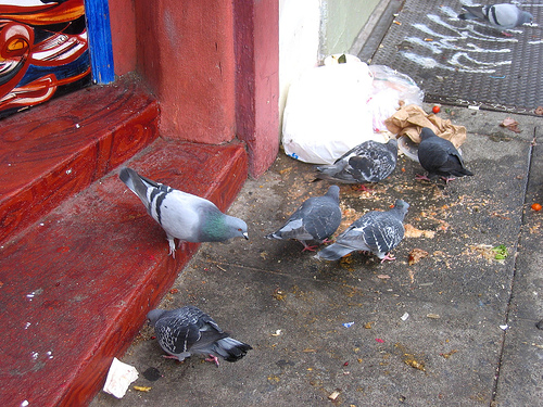 The pigeon version of a Friday night kebab & chips... (c)whizchickenonabun / Eating Images